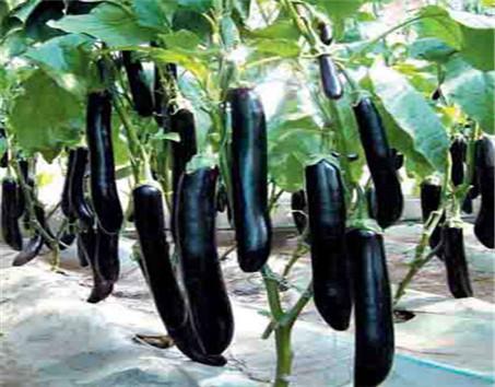 莲藕在生长发育过程中所需要的营养物质