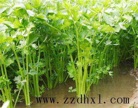 芹菜种植方法_叶面肥使用方法